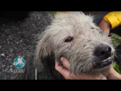 """""""Coconut"""" - IFAW Cozumel Dog Project Work featuring CEO Azzedine Downes"""