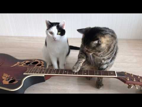 2 cats play the guitar