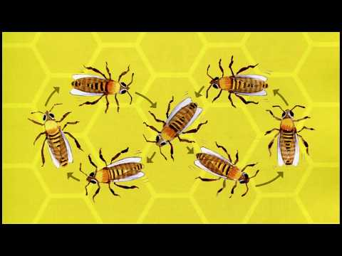 The Arts Page   Program   #607: A Busy Bee - The Making of a Children's Opera