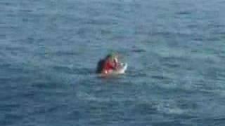 Surf com tubarão