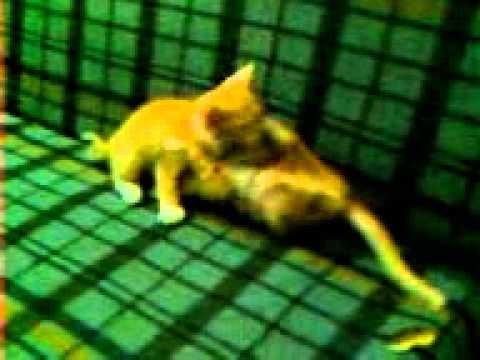 Vídeo Gatos brign.3gp
