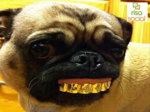Imagenes de animales graciosas que te harán reir partirte de risa 2016 RisaSocial