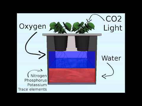 Off the grid hydroponics: the Kratky method