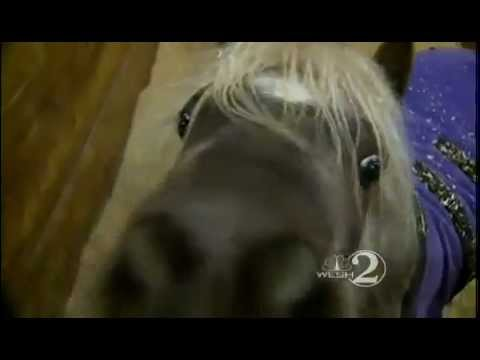 Owner says man sexually abused her miniature horses from YouTube · Duration:  1 minutes 56 seconds