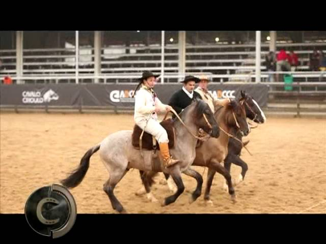 Regulamento da Campereada Team Penning