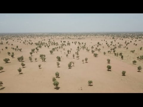 A fragile Great Green Wall for Africa • FRANCE 24 English
