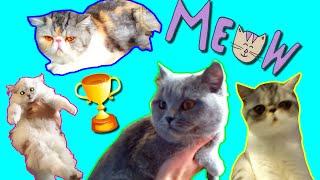 Кошки и котики всех пород/Персы, сфинксы, ангорские - таких вы еще не видели/Очень много кошек сразу