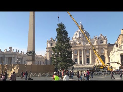Vatican Christmas Tree arrives in St. Peter's Square