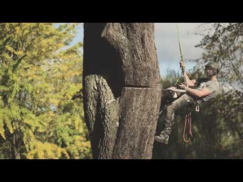 Horse Chestnut Tree Removal - Arbortec Collaboration