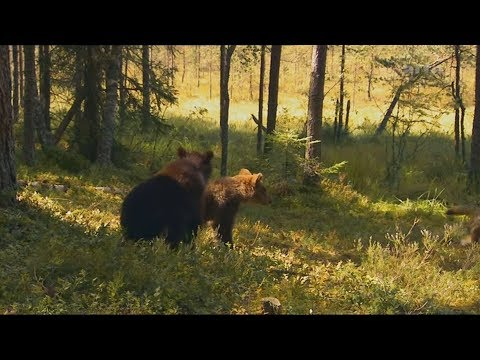 Baby Bears Alone in the Forest