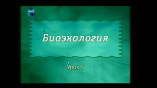 видео 2.3. Экологическая структура биоценоза.