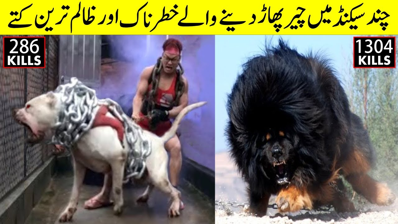 Most Strongest and Fearless Dog Breeds || Yellow