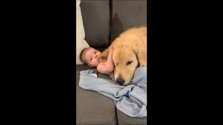 Protective Dog and Baby Cozy Together on Couch
