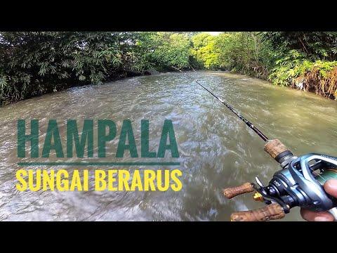 Mancing Hampala Yang Liar Sungai Berarus & Sedikit Keruh.