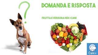 Quale frutta e quale verdura può mangiare il cane, e quale invece deve essere evitata?