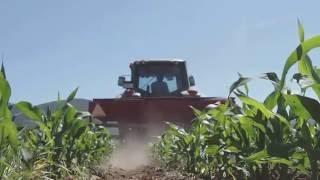 Σκαλισμα καλαμποκιων 2016. cultivation of corn