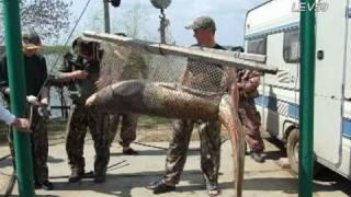 АВАЛОН - Наш отдых и рыбалка на базе  - часть 1.avi(Наш отдых и рыбалка на базе