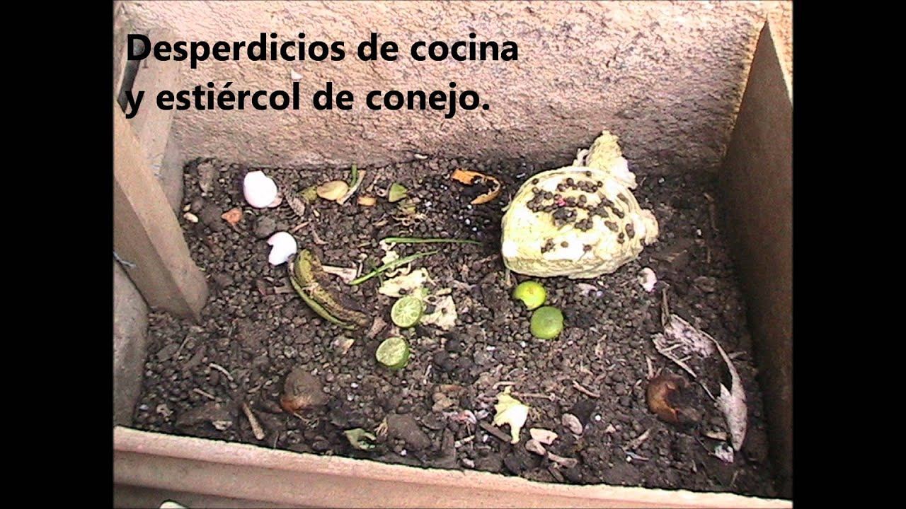 Abono organico youtube - Abono organico para plantas ...