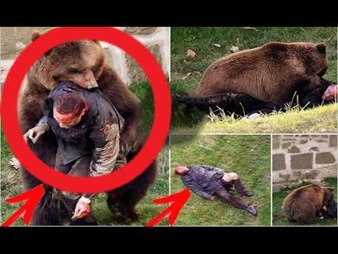 Ужасное нападение медведей на людей. Шокирующая подборка 2017 / Медведь убивает людей! - Жесть!
