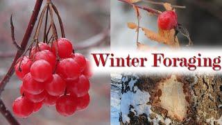 Plants for Surviving a Cąnadian Winter