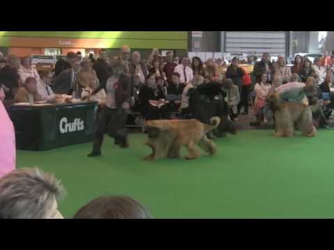Crufts 2017 - Dog Challenge