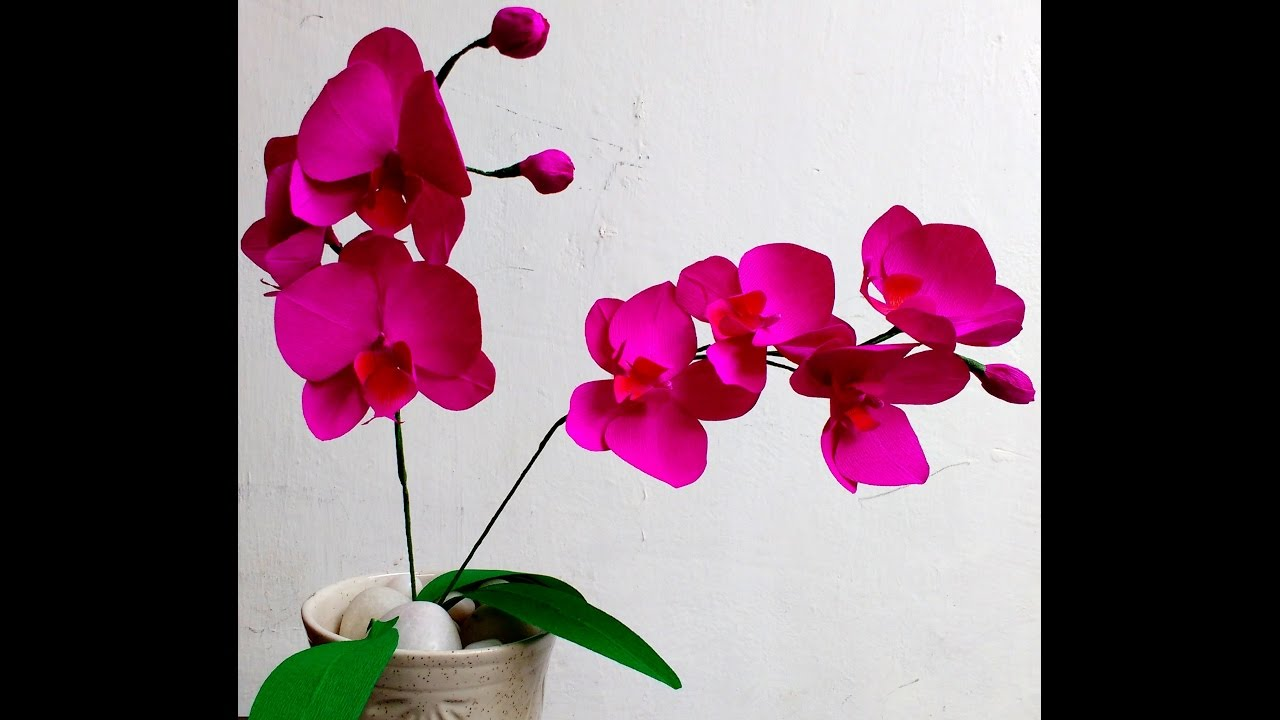 How To Make Easy Paper Flowers Orchid Phalaenopsis Moth Orchid