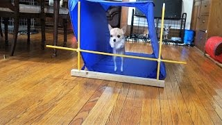 DOG TRAINING 101 WITH GABBY