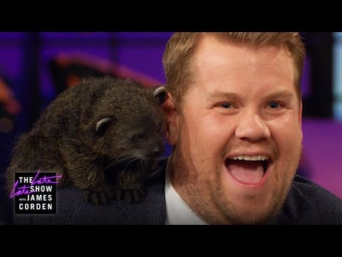 Thumbnail: Leopards, a Bearcat & Penguin w/ Jack Hanna