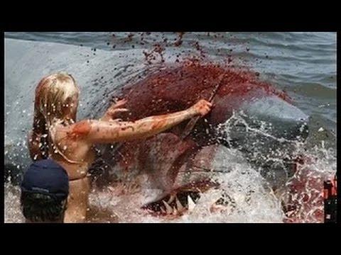 SHARK ATTACKS caught on camera, Australia's Deadliest White Shark Coast 2016