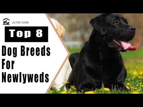 8 Best Dog Breeds For Newlyweds - Best Dogs For First Time Owners