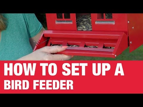 How To Set Up A Bird Feeder - Ace Hardware