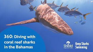 360: Diving with Coral Reef Sharks in the Bahamas