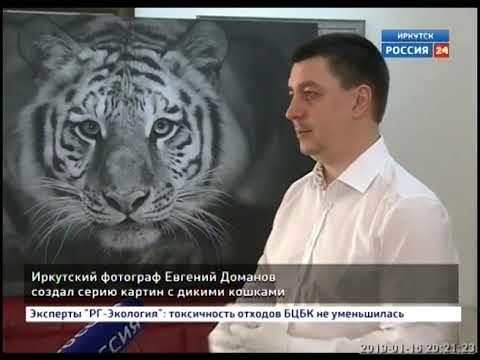Иркутский фотограф Евгений Доманов создал серию картин с дикими кошками