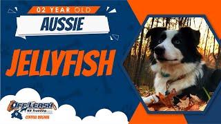 2yo Aussie (Jellyfish) Best Aggressive Dog Trainers in Fredericksburg VA