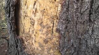 Для чего необходима обработка древесины антисептическими пропитками НЕОМИД