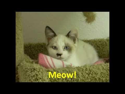 Cats - Music By Barnes & Barnes