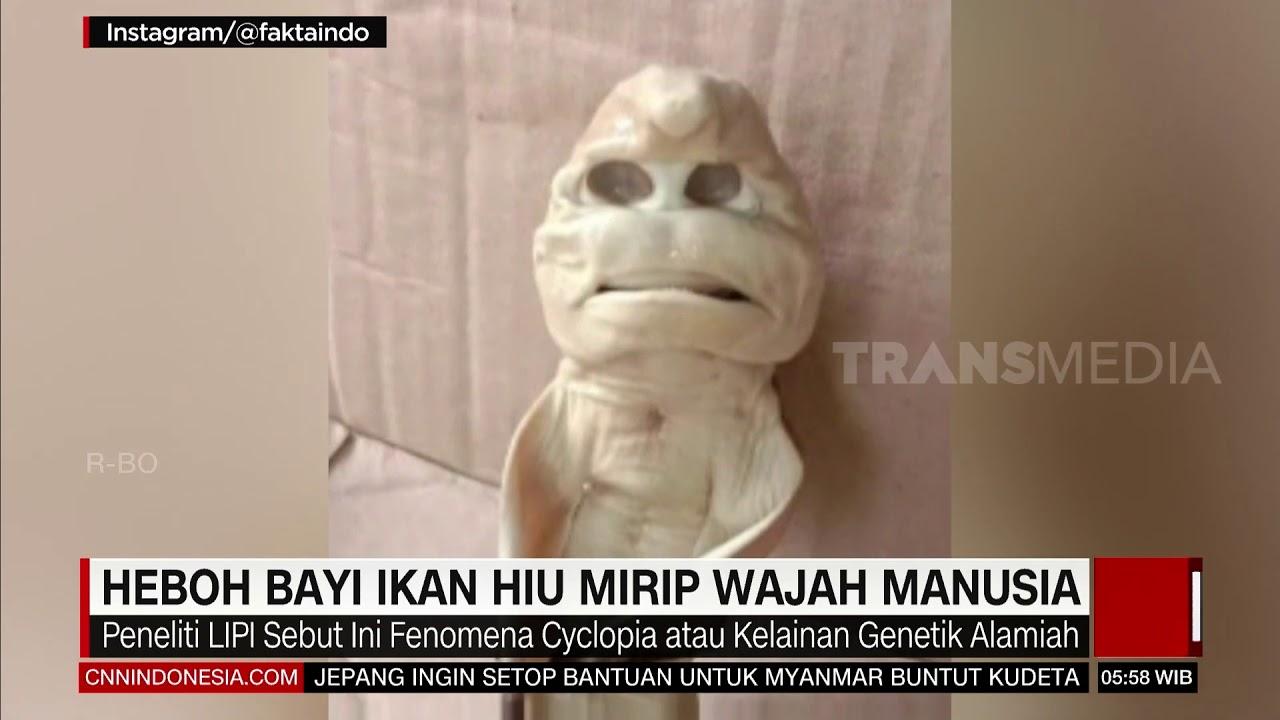 Heboh Bayi Ikan Hiu Mirip Wajah Manusia| REDAKSI PAGI (26/02/21)