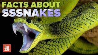 25 SHOCKING Snake Facts