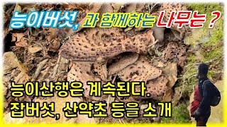 #119.끝나지 않은 능이버섯산행, 잡버섯들과 약용버섯…
