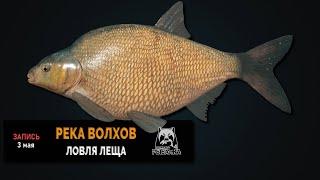 Русская Рыбалка 4 Лещ на реке Волхов