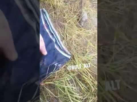 В Якутии рыбак спас друга, которого медведь уволок из палатки (видео)