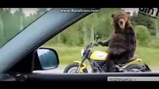 Прикол: медведь на велосипеде !!!(, 2016-05-13T18:47:15.000Z)