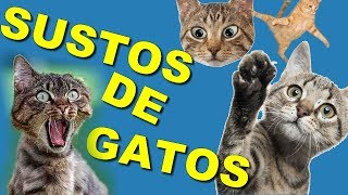 Vídeos engraçados de gatos tomando  susto (Funny videos of cats taking fright)
