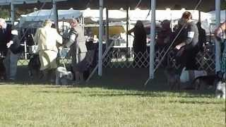 Cairn Terrier Rocky Nov. 8, 2012 Competing In Group
