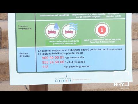 VÍDEO: Ayuntamiento y cooperativas trabajan conjuntamente para conseguir una campaña olivarera sin COVID