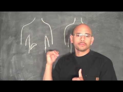hqdefault - Referred Back Pain Gallbladder
