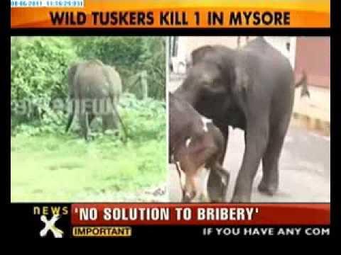 פיל הורג בנאדם בהודו