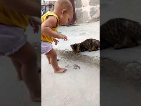 Janvi playing cat 2