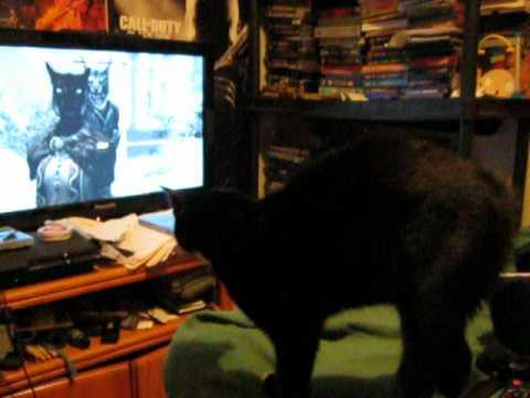 Kitty Responds to Khajiit Skyrim