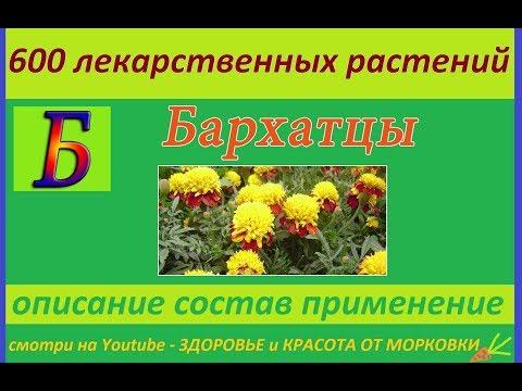 бархатцы мелкоцветные 600 лекарственных растений